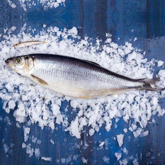Сельдь малосольная  | Интернет магазин рыбы и мяса Купи ракушку