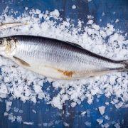 Сельдь малосольная  | Интернет магазин рыбы и мяса Купи ракушку (2)