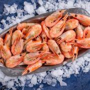 Креветка гренландская сырец | Гренландские креветки купить в Одессе (1)