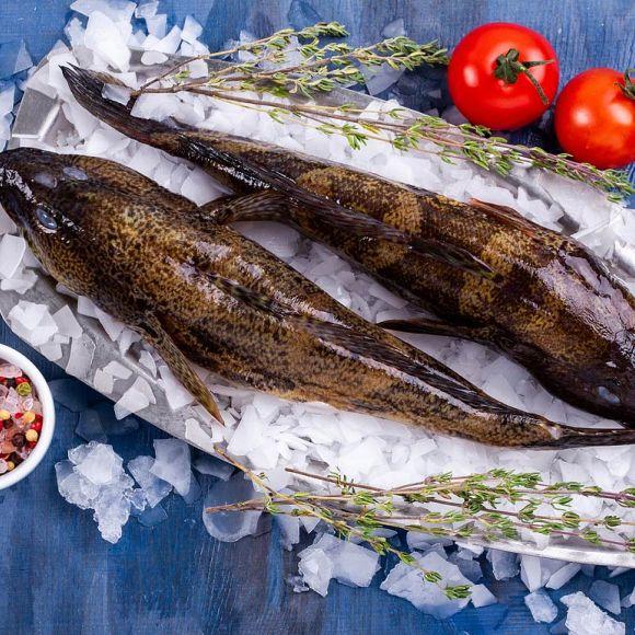 Бычок (кнут) Черноморский    Купить рыбу с доставкой в Одессе