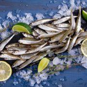 Ферина Черноморская крупная | Купить ферину опт и розница (4)