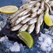 Ферина Черноморская крупная | Купить ферину опт и розница (3)