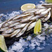 Ферина Черноморская крупная | Купить ферину опт и розница (2)