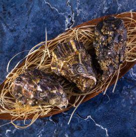 Устрица жилардо