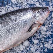 Купить лосось в Одессе   Замороженная и охлажденная рыба с доставкой (5)
